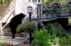 A big bear is on the back porch... but the reaction of the grandmother is EPIC !