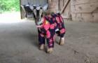 En 10 secondes, ce que font ces petites chèvres vous mettront de bonne humeur