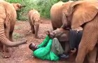 Un elefantino terrorizzato viene abbandonato dalla madre: ecco la sua nuova FAMIGLIA!