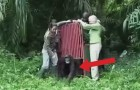 Salvò questo scimpanzé da morte certa: quando lo liberano avviene una cosa spettacolare
