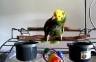 Un neonato llega a la familia, lo que comienza a hacer este papagallo es de no creer