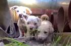 Salvano una mamma con i cuccioli, ma non erano preparati per la sorpresa finale!