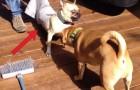 Ver estos perros que se meten en problemas nos cambiara el dia!