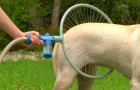 This BRILLIANT invention will facilitate the lives of dogs and their owners ... Wow!