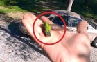 He picks up a dying hummingbird: the way this man helps it is amazing !