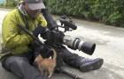 Een kitten rent op een fotograaf af: wat er daarna gebeurd is onbetaalbaar!