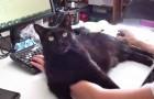 Je kat laat je niet werken? Zie hier de oplossing!