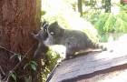 Den här mamman vill få sin liten att klättra i trädet, men det verkar...OMÖJLIGT!