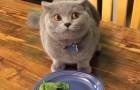 En seulement 4 secondes, ce chat COUPABLE vous fera trop rire!