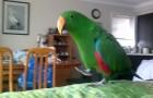 Esto sucede cuando este papagallo escucha su musica preferida