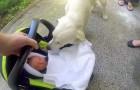 Les parents apportent le bébé à la maison, la réaction du chien est exceptionnelle :)