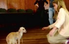She reaches out to this abandoned and terrified dog: look at his reaction ...