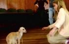 Hon sträcker ut handen till denna övergivna och livsrädda hund: titta på hur den reagerar...