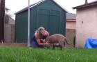 Intervengono per un cane abbandonato, ma troveranno una SORPRESA nelle fondamenta della casa...