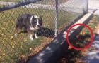 What this clever dog is able to do is really BRILLIANT !