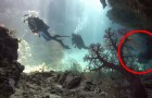 Ils vont en vacances sur les îles Fidji : ce qu'ils filment sous l'eau est MERVEILLEUX