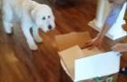 Il fait une surprise à son chien pour son anniversaire. Qu'y-a-t-il dans la boîte?