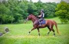 Het paard is eerst nog wat huiverig, maar hij overwint zijn angst en gaat ervoor... Wow!