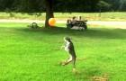 Un cane vede un pallone rosso in aria: la sua reazione vi farà sorridere