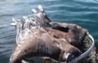 Un pescatore nota qualcosa muoversi nel lago: ecco come riesce a salvare il maestoso animale