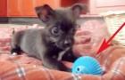 Deze pup krijgt een nieuwe bal die anders is dan andere ballen!