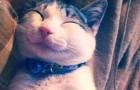 Peu importe la jounée que tu as eu, les 12 chats les plus souriants du web te mettra de bonne humeur