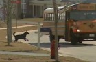 The doors of the school bus open : the behavior of the dog makes everyone smile! This is awesome !