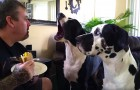 He does not want to share his sandwich, but look how the dog on the left reacts...