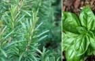 Le 5 piante che più di altre portano energia positiva all'interno della casa