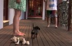 When someone tries to annoy his owner, the reaction of this dachshund is very clear... !