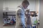 Wie denkt dat katten geen genegenheid kunnen tonen, hebben HEM nog nooit ontmoet...