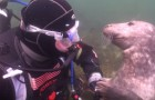 A seal approaches this diver asking for something ... When you understand what he's looking for, you will not believe it!