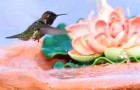 A hummingbird arrives on the fountain: what he does in 2 minutes is a masterpiece of nature