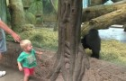 A child and a baby gorilla look at each other: what they do soon after, is priceless