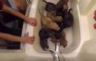 Deze 10 pups hebben hun moeder verloren: hun verhaal is ontroerend