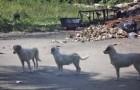 Esta playa es famosa por un motivo horrible, pero estos perros seran mas AFORTUNADOS!