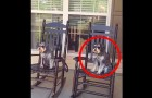 She starts filming her dogs on the porch, but keep your eyes on the one on the right ...