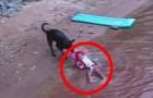 Un enfant joue dans l'eau, ce que fait le chien pourrait un jour lui sauver la vie