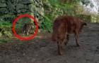 Dieser alte Hund ist komplett blind, aber schaut mal, was die Katze links macht...
