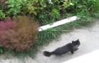 Este mulher inventou um jeito genial para ajudar o seu gato a entrar em casa!