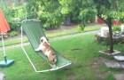 Diese Bulldogge liebt es im Garten zu spielen, aber das passiert, wenn es zu regnen beginnt