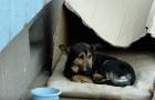 Han bodde i en låda och alla ignorerade honom, men titta vad som händer när någon kommer nära...