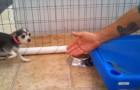 Questo cane ha sempre vissuto chiuso in gabbia, ma poi un uomo lo accarezza per la prima volta