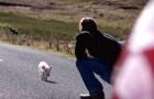Der Postbote bemerkt ein kleines Tier auf der Straße. Das passiert, als er es nach Hause bringt