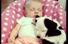 Un enfant et un chien grandissent ensemble: leur première année de vie est forte en émotion