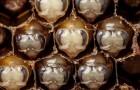 Une vidéo fascinante de 60 secondes montre les 21 premiers jours de la vie d'une abeille