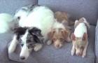 3 verschillende honden zitten op de bank: wat ze samen kunnen doen is ongelooflijk