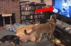 Passam o seu filme preferido na TV, o comportamento do cachorro vai te fazer morrer de rir!