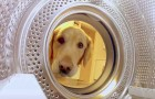 A dog walks towards the washing machine ... what she plans to do to make you smile