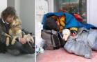 10 chiens qui aiment à la folie leurs maîtres, même s'ils n'ont rien de matériel